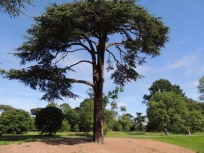 Summer branch drop