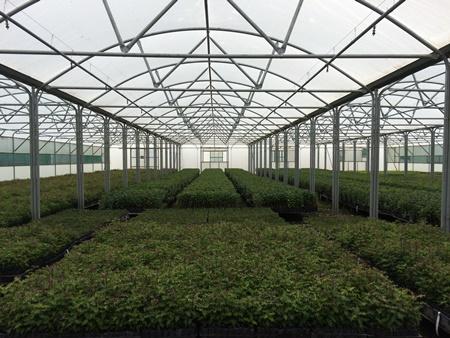 Greenhouse 450