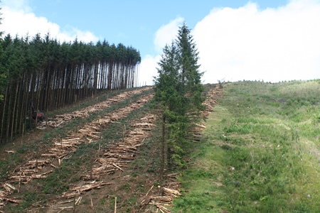 harvesting replanting 450
