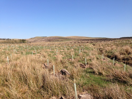 northumberland new planting 500