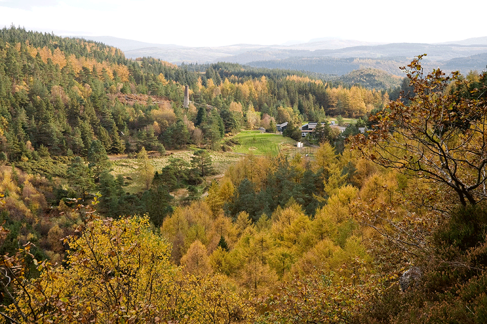 Wales-Autumn-trees-general